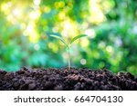 young plant growing in nature.   Shutterstock . vector #664704130