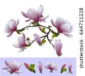 magnolia | Shutterstock .eps vector #664711228