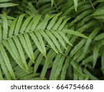 close up fern leaf with water... | Shutterstock . vector #664754668