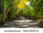 Palm Leaves.tropical Forest On...
