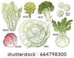 color vegetables set. isolated... | Shutterstock . vector #664798300