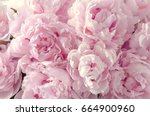 Beautiful Flowers  Peonies....