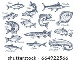 fishes sketch icons of tuna ... | Shutterstock .eps vector #664922566