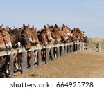 A horse among mules