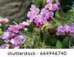 beautiful light purple... | Shutterstock . vector #664946740