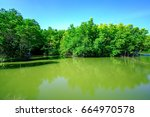 mangrove trees in forest at can ... | Shutterstock . vector #664970578