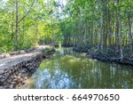 mangrove trees in forest at can ... | Shutterstock . vector #664970650