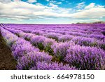 blooming lavender field under... | Shutterstock . vector #664978150