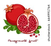 exotic pomegranate and... | Shutterstock .eps vector #664991764
