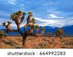 Joshua Trees In High Desert...