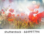 wild red poppies on the meadow... | Shutterstock . vector #664997794