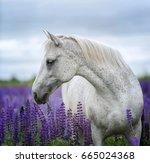 beautiful arabian horse on...   Shutterstock . vector #665024368