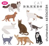 cat breeds icon set flat style... | Shutterstock .eps vector #665063584
