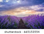 beautiful landscape of lavender ... | Shutterstock . vector #665153554