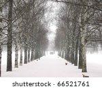 Alley Of  Birch At Winter