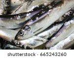 Stock photo fresh baltic herring fishing 665243260