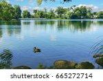 a duck on a pond. summer... | Shutterstock . vector #665272714