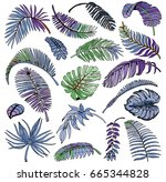tropical palm leaves set.... | Shutterstock .eps vector #665344828