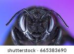 Bee Bug Insect Fly Eye Summer...