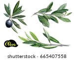 olives watercolor illustration. ... | Shutterstock . vector #665407558