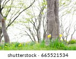 the flowers and grass become a... | Shutterstock . vector #665521534