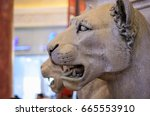 Lioness Sculpture In Ibn...