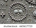intricate shell designs and... | Shutterstock . vector #665617723