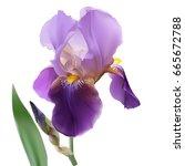 iris flower. hand drawn vector...   Shutterstock .eps vector #665672788