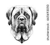 head dog breed mastiff  sketch... | Shutterstock .eps vector #665693050