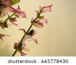 elegant composition of clary... | Shutterstock . vector #665778430