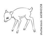 hand drawn sketch of deer rat...