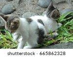 Stock photo kittens 665862328