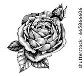 hand drawn botanical art... | Shutterstock .eps vector #665866606