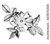 hand drawn botanical art... | Shutterstock .eps vector #665876368