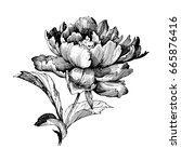 hand drawn botanical art...   Shutterstock .eps vector #665876416
