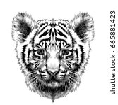 Tiger Cub Head Sketch Vector...