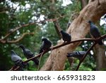pigeons | Shutterstock . vector #665931823