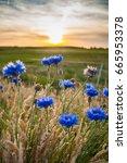 Beautiful Blue Summer Flowers...