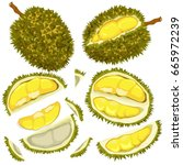 exotic durians and cut pieces... | Shutterstock .eps vector #665972239
