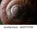 snail shell texture.shell of... | Shutterstock . vector #665973784