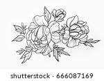 sketch of branch of beautiful... | Shutterstock . vector #666087169