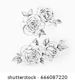 sketch of a branch of beautiful ... | Shutterstock . vector #666087220