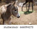 donkey | Shutterstock . vector #666094273