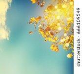 autumn leaves | Shutterstock . vector #666109549