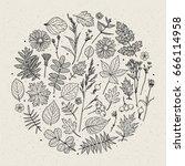 Set Of Illustrations Of Plants...