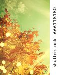 autumn leaves | Shutterstock . vector #666118180