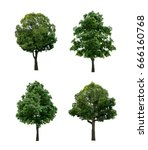 set of tree isolated on white... | Shutterstock . vector #666160768