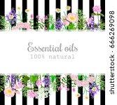 popular essential oil plants... | Shutterstock .eps vector #666269098
