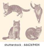 cats. design set. hand drawn...   Shutterstock .eps vector #666269404