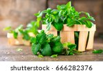 mint. bunch of fresh green... | Shutterstock . vector #666282376